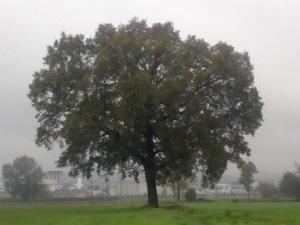 """Il """"mio"""" albero [20131119]"""