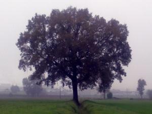 """Il """"mio"""" albero [20131109]"""