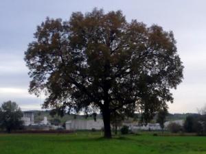 """Il """"mio"""" albero [20131111]"""