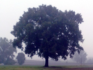 il mio amato albero