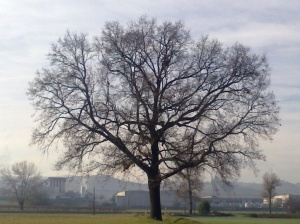"""Il """"mio"""" albero [20131207 - mattina]"""