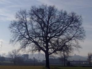 """Il """"mio"""" albero [20131207 - pomeriggio]"""