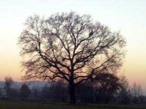 """Il """"mio"""" albero [20131207 - sera]"""