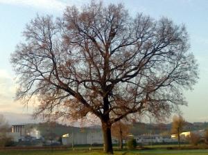 """Il """"mio"""" albero [20131203]"""