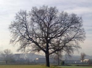 """Il """"mio"""" albero [20131207]"""