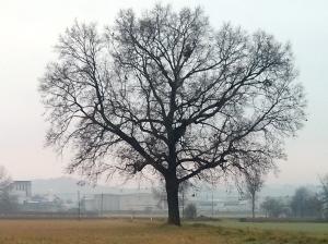 """Il """"mio"""" albero [20131221]"""