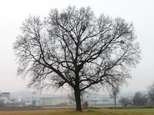 """Il """"mio"""" albero [20131223]"""
