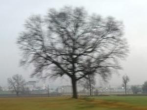 """Il """"mio"""" albero [20131230]"""