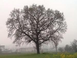"""Il """"Mio"""" Albero [20140320 equinozio primavera]"""