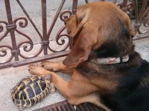 Cane e tartaruga