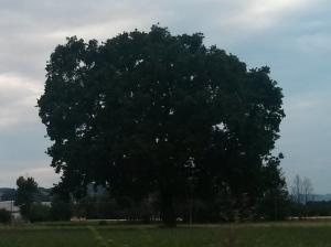 """Il """"Mio""""  Albero [20140616 - sera]"""