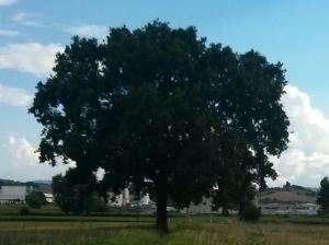 """Il """"Mio""""  Albero [20140627 - sera]"""