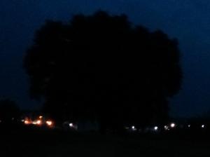 """Il """"Mio""""  Albero [20140702 - notte]"""