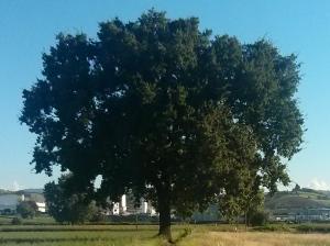 """Il """"Mio""""  Albero [20140731 - sera]"""