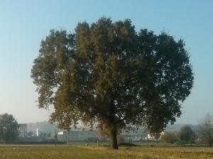 """Il """"Mio""""  Albero [20141029]"""