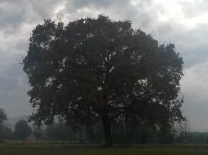 """Il """"Mio""""  Albero [20141105 - sera]"""
