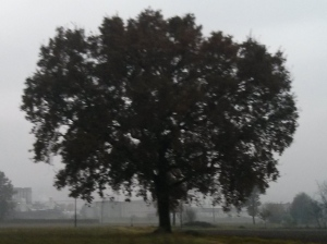 """Il """"Mio""""  Albero [20141105]"""