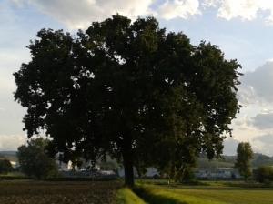 """Il """"Mio"""" Albero [settembre 2015]"""