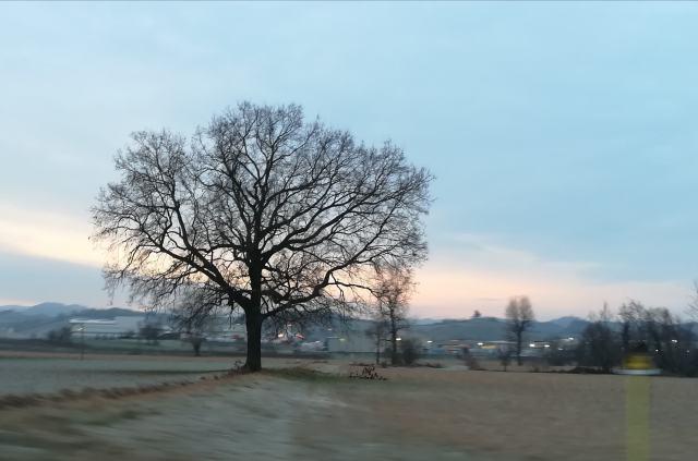 "Il ""mio"" albero - 8 gennaio 2019"
