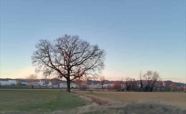 "Il ""mio"" albero - 10 gennaio 2019"