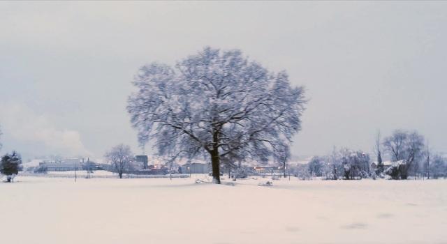 "Il ""mio"" albero - 24 gennaio 2019"