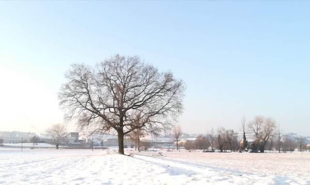 "Il ""mio"" albero - 25 gennaio 2019"