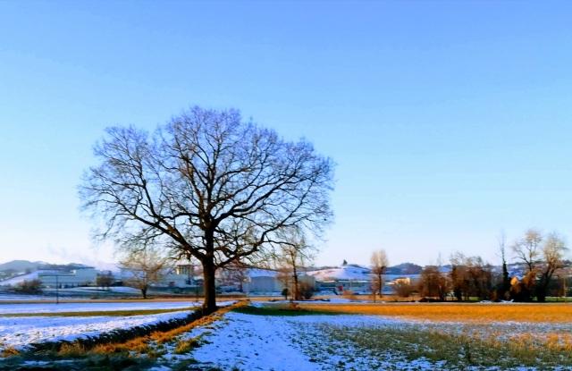 "Il ""mio"" albero - 29 gennaio 2019"