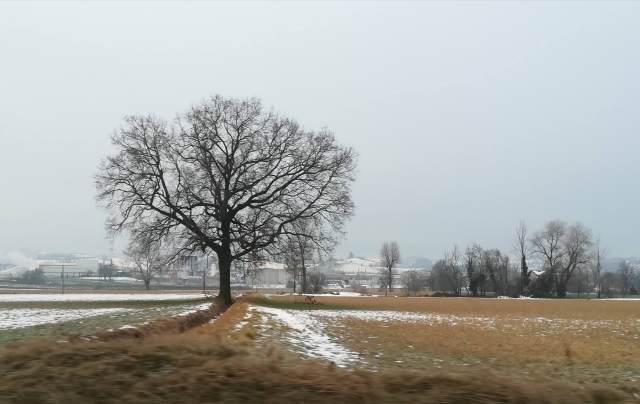 "Il ""mio"" albero - 30 gennaio 2019"