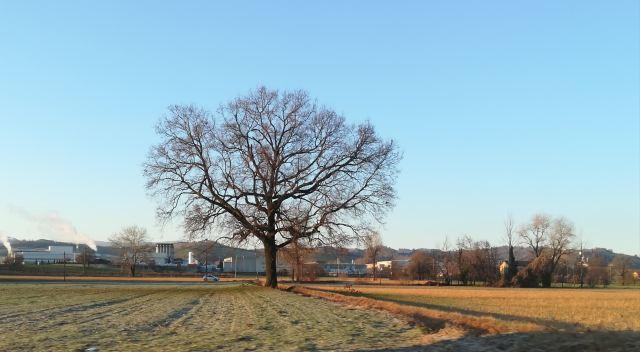 """Il """"mio"""" albero - 6 febbraio 2019"""