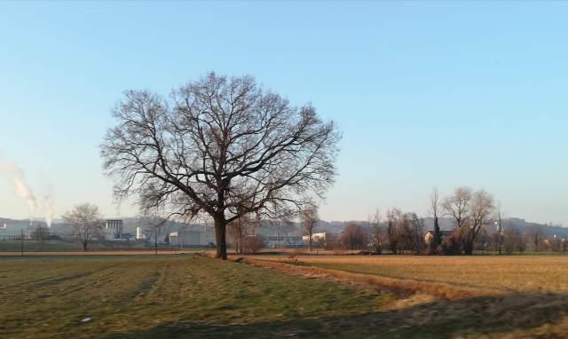 """Il """"mio"""" albero - 8 febbraio 2019"""