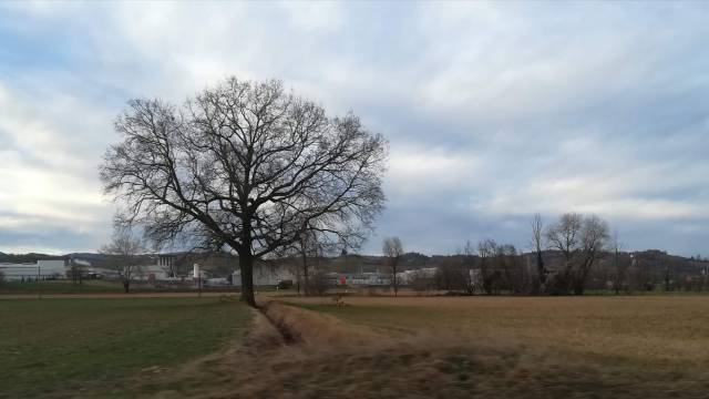 """Il """"mio"""" albero - 11 febbraio 2019"""