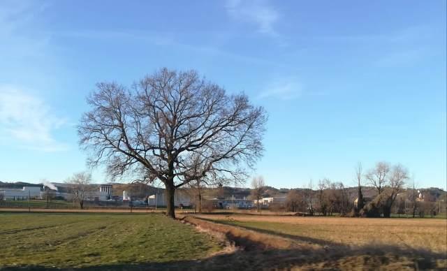 """Il """"mio"""" albero - 12 febbraio 2019"""