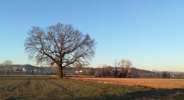 """Il """"mio"""" albero - 13 febbraio 2019"""