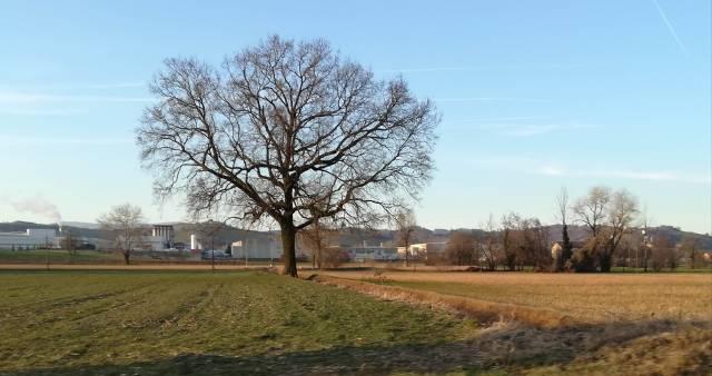 """Il """"mio"""" albero - 14 febbraio 2019"""