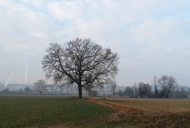 """Il """"mio"""" albero - 20 febbraio 2019"""