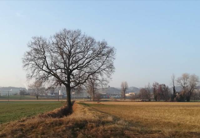 """Il """"mio"""" albero - 21 febbraio 2019"""