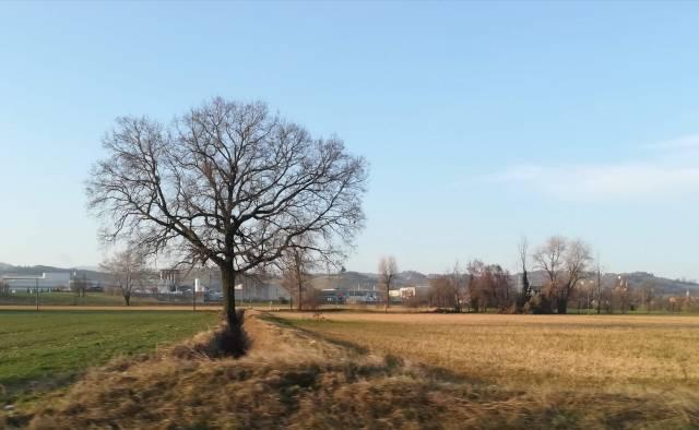 """Il """"mio"""" albero - 22 febbraio 2019"""