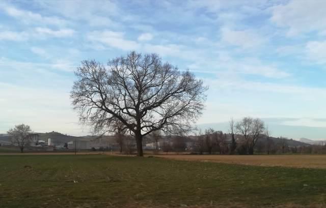 """Il """"mio"""" albero - 26 febbraio 2019"""