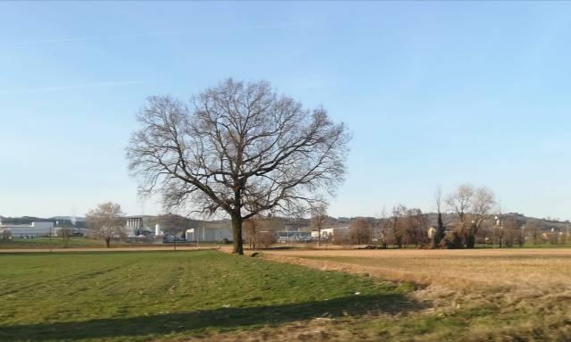 """Il """"mio"""" albero - 27 febbraio 2019"""