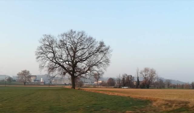 """Il """"mio"""" albero - 1 marzo 2019"""