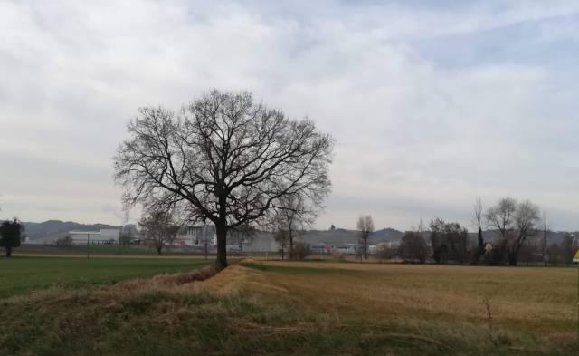"""Il """"mio"""" albero - 5 marzo 2019"""