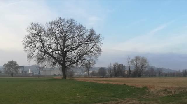 """Il """"mio"""" albero - 7 marzo 2019"""