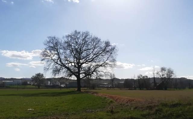 """Il """"mio"""" albero - 8 marzo 2019"""