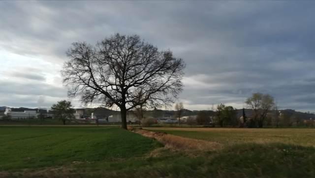 """Il """"mio"""" albero - 13 marzo 2019"""