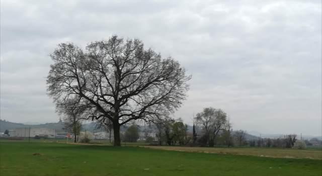 """Il """"mio"""" albero - 19 marzo 2019"""