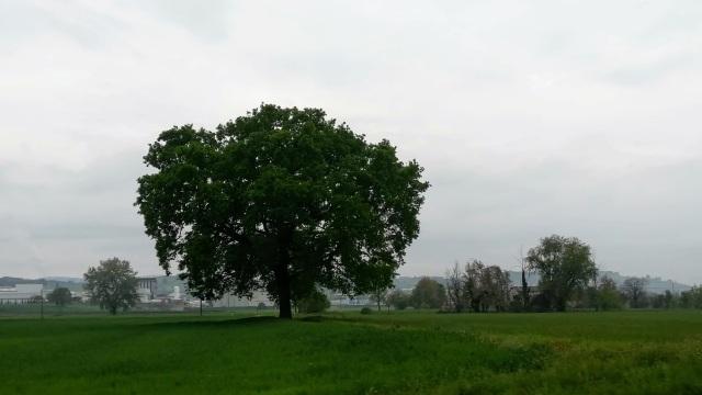 """Il """"mio"""" albero - 11 aprile 2019"""