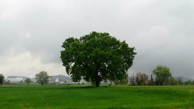 """Il """"mio"""" albero - 12 aprile 2019"""