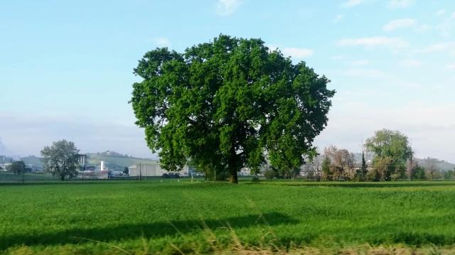 """Il """"mio"""" albero - 15 aprile 2019"""