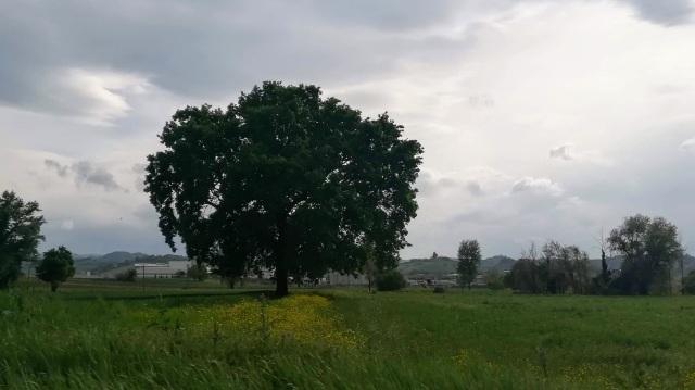 """Il """"mio"""" albero - 24 aprile 2019"""