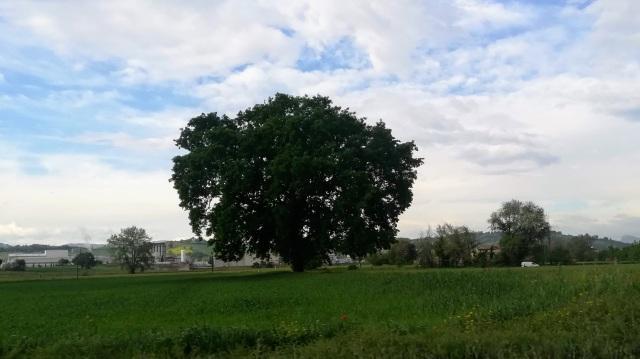 """Il """"mio"""" albero - 3 maggio 2019"""